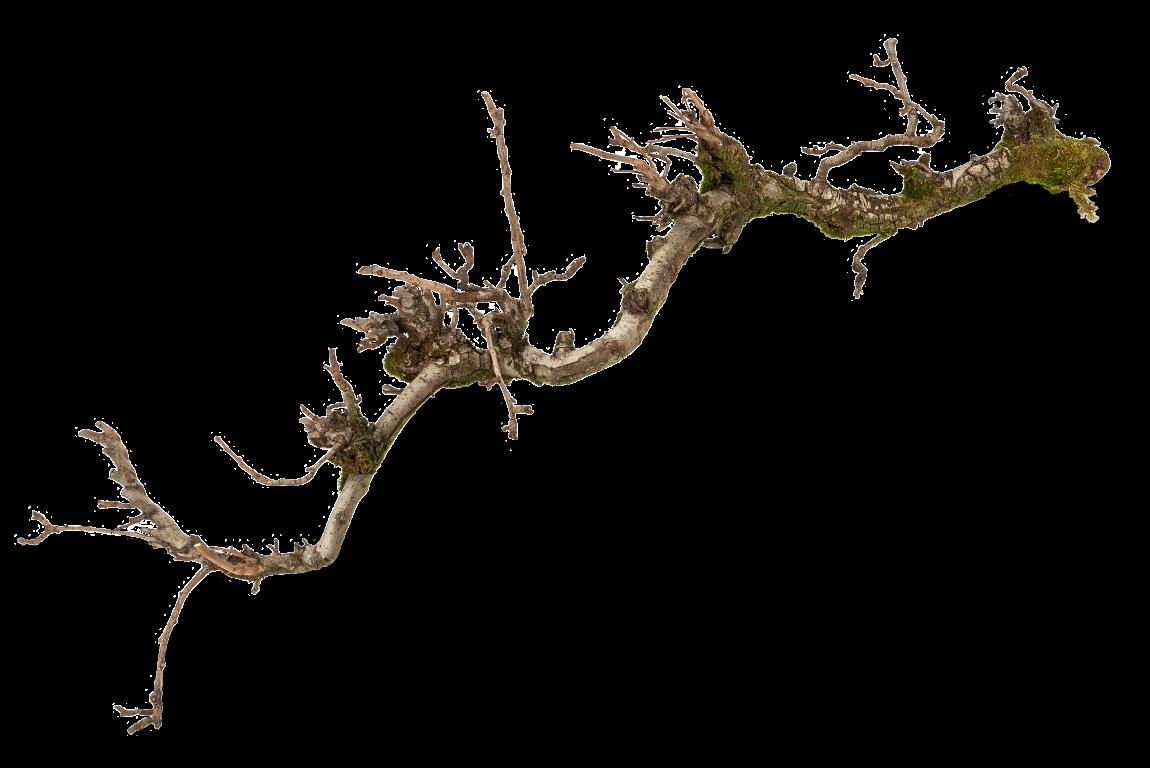 Dekozweig Birne mit Moos ca. 100cm