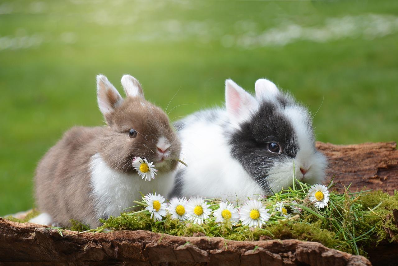 Kleintiere