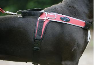 Tre Ponti Geschirr Forza mit reflektierenden Rand rosa 50 - 65 cm bis ca. 10 - 20 kg