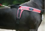 Tre Ponti Geschirr Forza mit reflektierenden Rand rot 100 - 120 cm bis ca. 40 - 60 kg 001