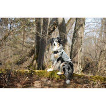 cani.cool Kühlweste für Hunde in div. Größen – Bild 9