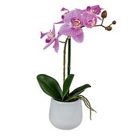 Formano Orchidee in Topf, 38 cm, pink