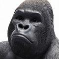 Kare Deko Affe Figur Monkey Gorilla Medium, 39x30x28 cm, schwarz Bild 4