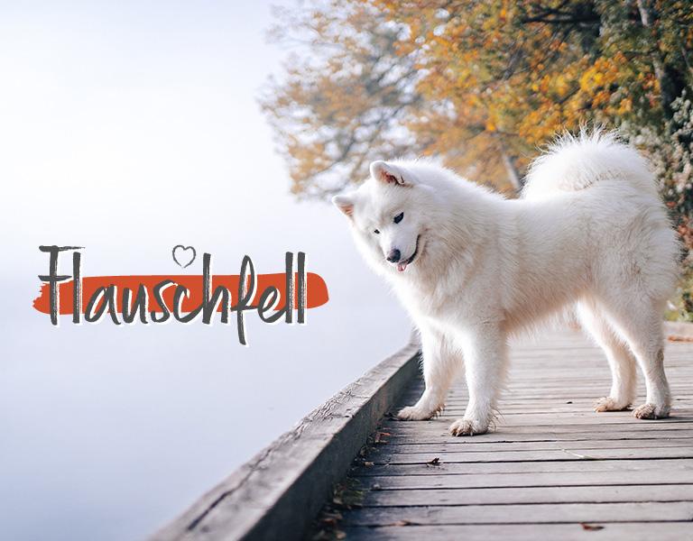 Tiervitalshop - Hund