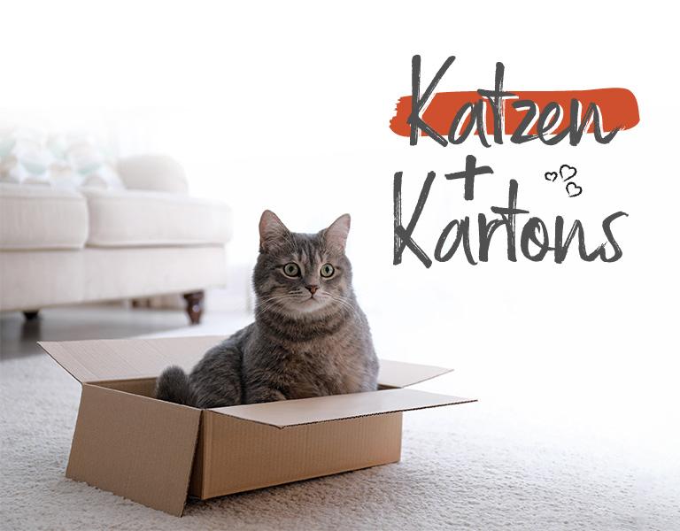 Tiervitalshop - Katze im Karton