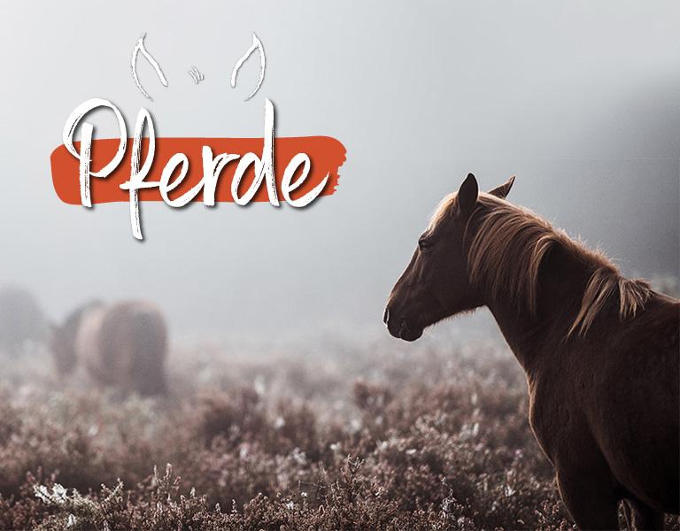 Tiervitalshop - Pferd