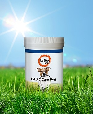 Basic Care Dog