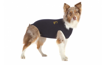 Medical Pet Shirt für Hunde
