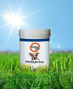 Renosan Dog