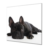 Küchenrückwand Glas Motiv Bulldogge