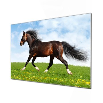 Küchenrückwand Glas Motiv Pferd