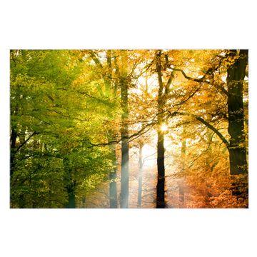 Küchenrückwand Glas Motiv Herbstwald