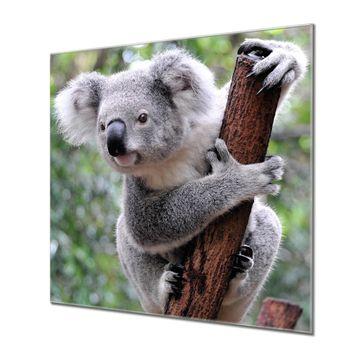 Küchenrückwand Glas Motiv Koala
