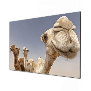 Küchenrückwand Glas Motiv Kamele