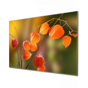 Küchenrückwand Glas Motiv Lampionblume