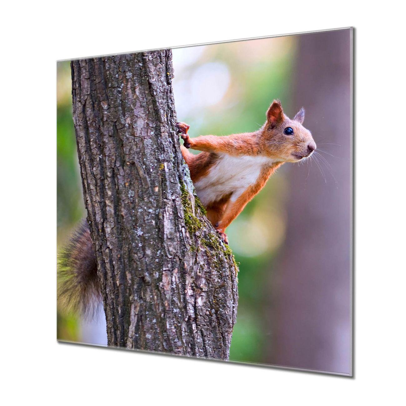 Küchenrückwand Glas Motiv Eichhörnchen