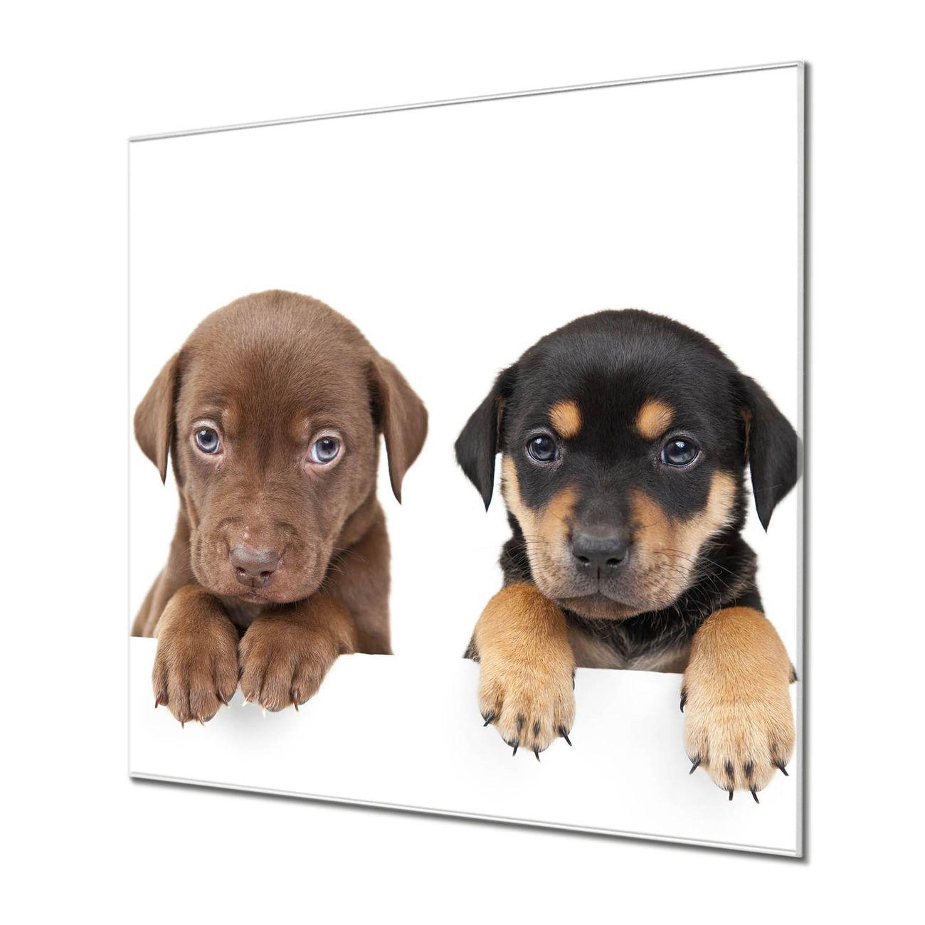 Küchenrückwand Glas Motiv Puppies
