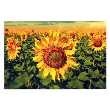 Küchenrückwand Glas Motiv Sonnenblumen