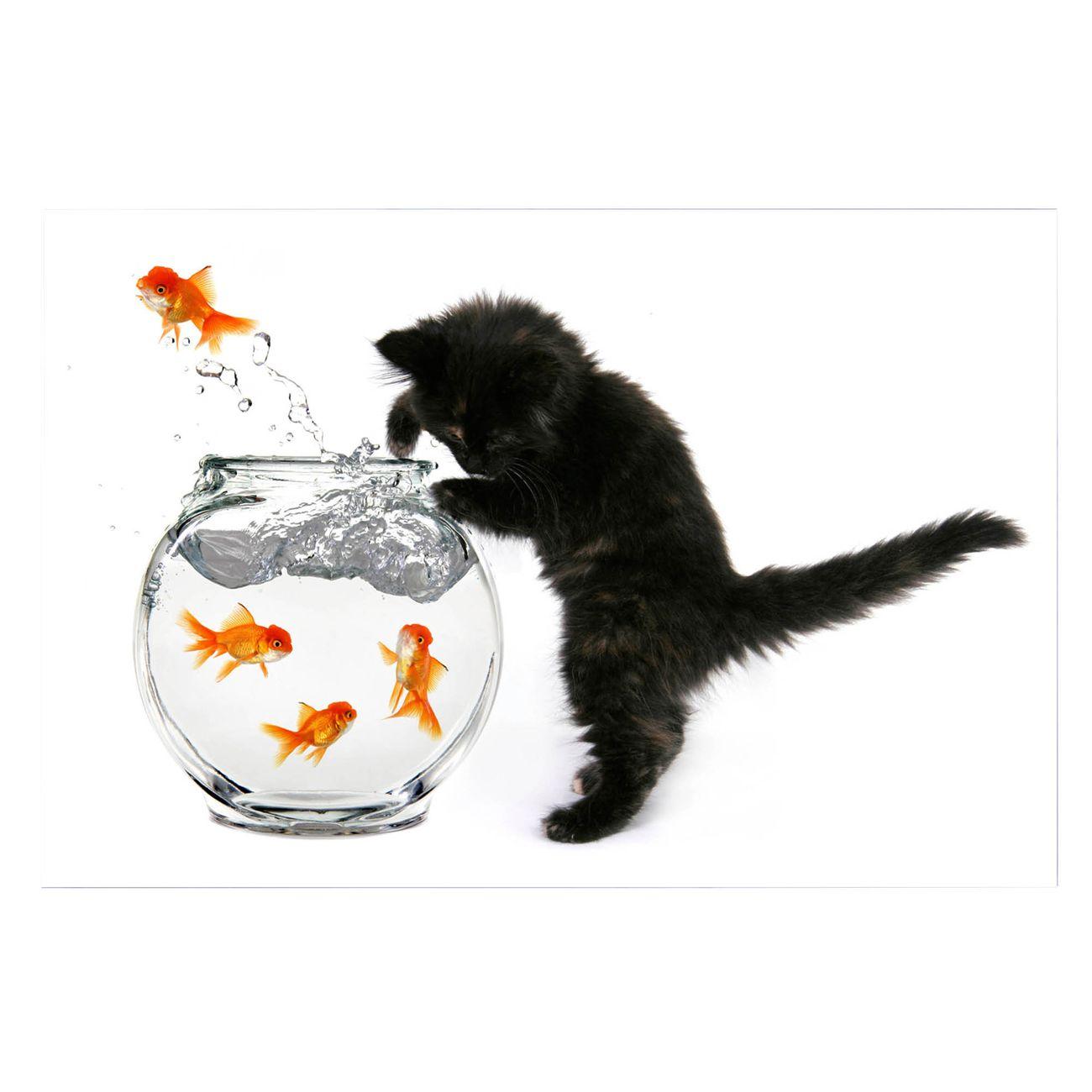 Küchenrückwand Glas Motiv Katze Und Fisch