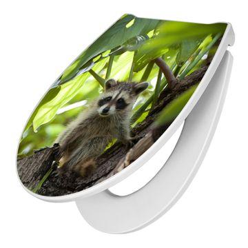 Premium WC-Sitz Softclose Absenkautomatik Motiv Waschbär