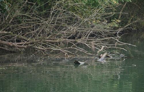 Hotspots für Angler
