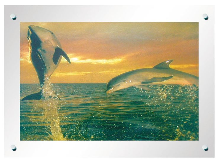 Tableau Dessin dauphin effet décor cadre avec la lumière étamé Globo 28355rti – Bild 1