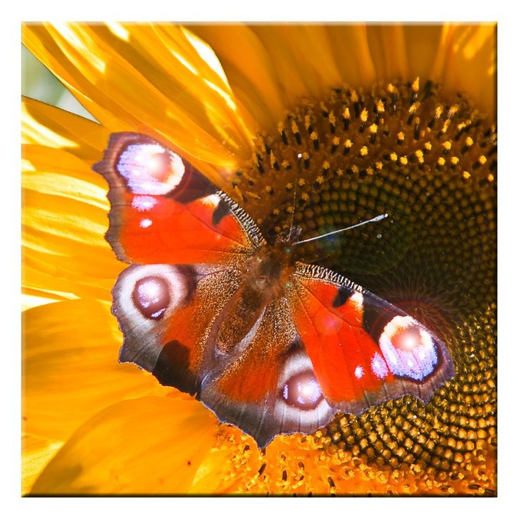 LED photo papillon mur décoration photo lumière éclairage image toile mur image chaud blanc Eglo 75037 – Bild 1