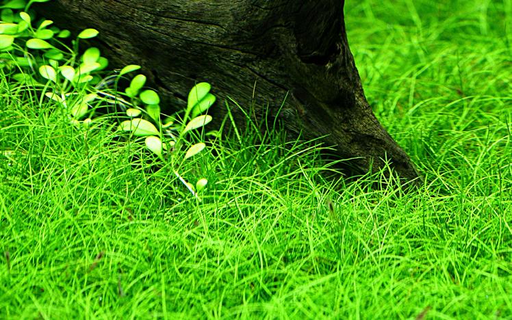 Nano Set Mit 6 Einfachen Kleinen Tropica Topf Pflanzen