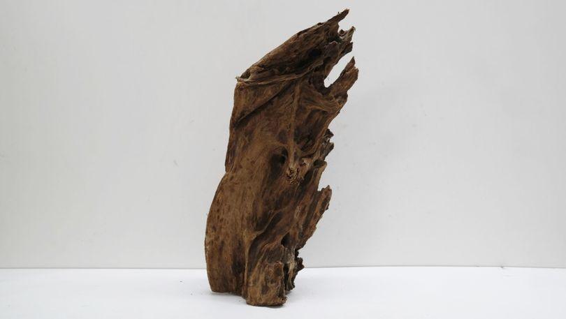 XL Mangrovenwurzel Maße 29x48x24 Nr.5874