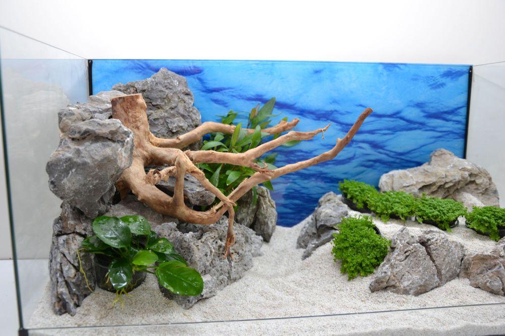 Aquarium dekoration komplettset moorkienwurzel steine for Aquarium komplettset