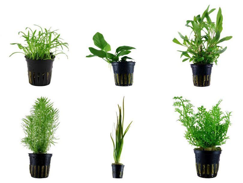 Einsteiger Set mit 6 einfachen Tropica Topf Pflanzen Aquariumpflanzenset Nr.4