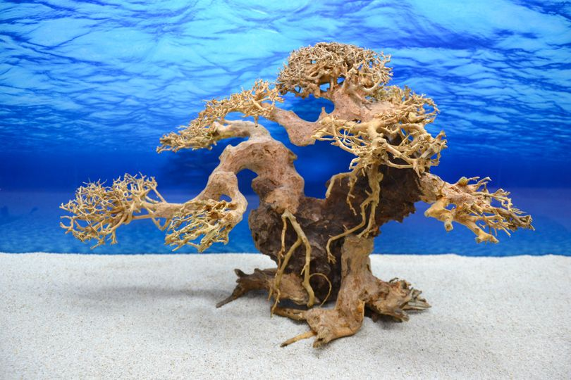 Bonsai Baum XL Wurzel Holz Aquarium Deko Aquascaping Wurzel original Foto Nr.600