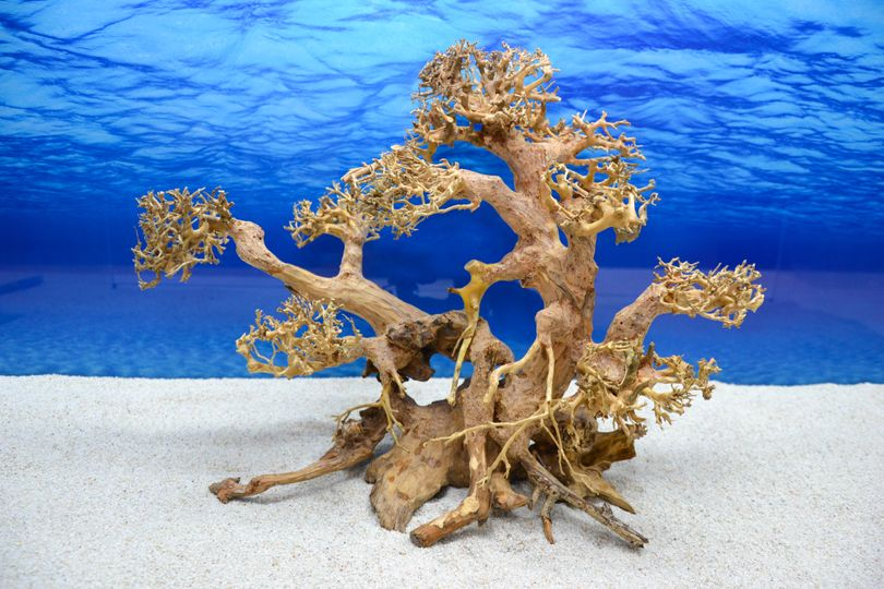 Bonsai Baum XL Wurzel Holz Aquarium Deko Aquascaping Wurzel original Foto Nr.604