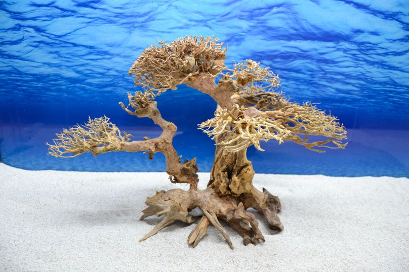Bonsai Baum XL Wurzel Holz Aquarium Deko Aquascaping Wurzel original Foto Nr.606