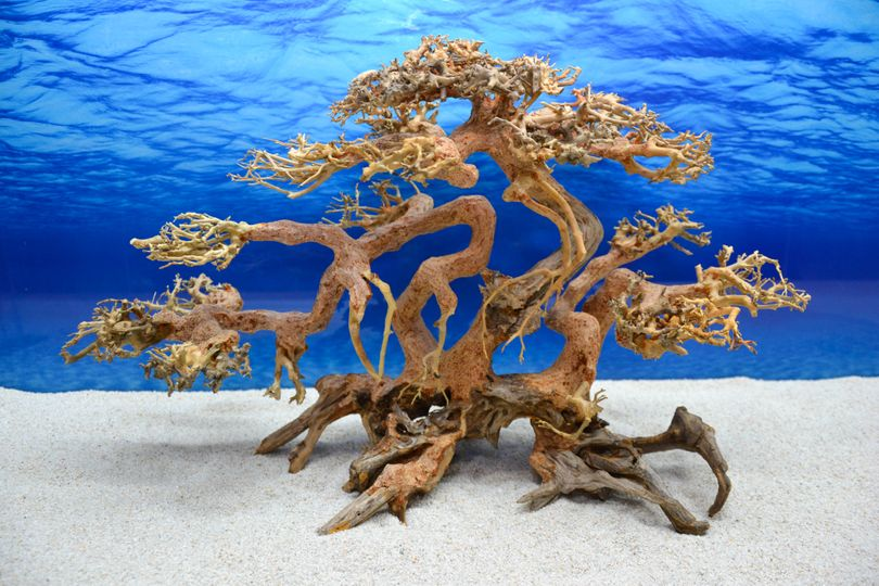 Bonsai Baum XL Wurzel Holz Aquarium Deko Aquascaping Wurzel original Foto Nr.611