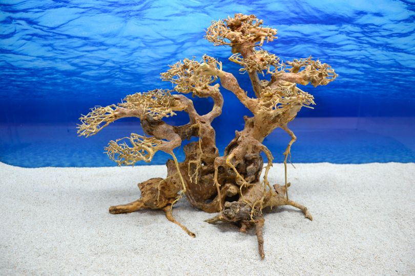 Bonsai Baum XL Wurzel Holz Aquarium Deko Aquascaping Wurzel original Foto Nr.612