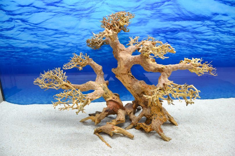 Bonsai Baum XL Wurzel Holz Aquarium Deko Aquascaping Wurzel original Foto Nr.616