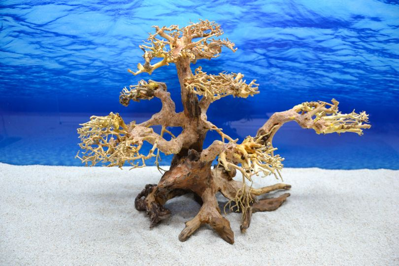 Bonsai Baum XL Wurzel Holz Aquarium Deko Aquascaping Wurzel original Foto Nr.619