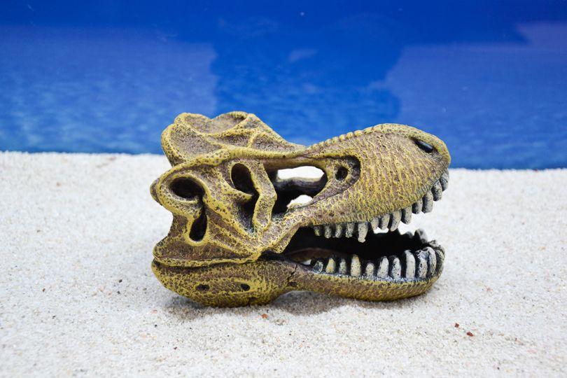Amtra Tyrannosaurus Schädel Aquarium-Deko