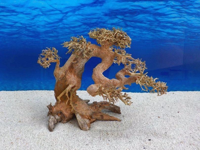 Bonsai Baum L Wurzel Holz Aquarium Deko Aquascaping Wurzel original Foto Nr.574