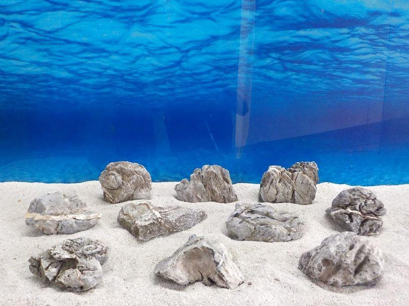 "Aquarium graue Dekosteine Seiryu Art.67 ""original Foto"" Größe M 12-18cm Nr.6709"