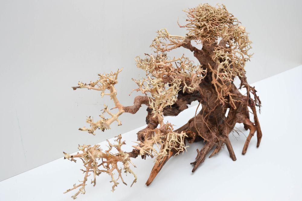 bonsai baum xxl original foto wurzel holz aquarium deko aquascaping ebay. Black Bedroom Furniture Sets. Home Design Ideas