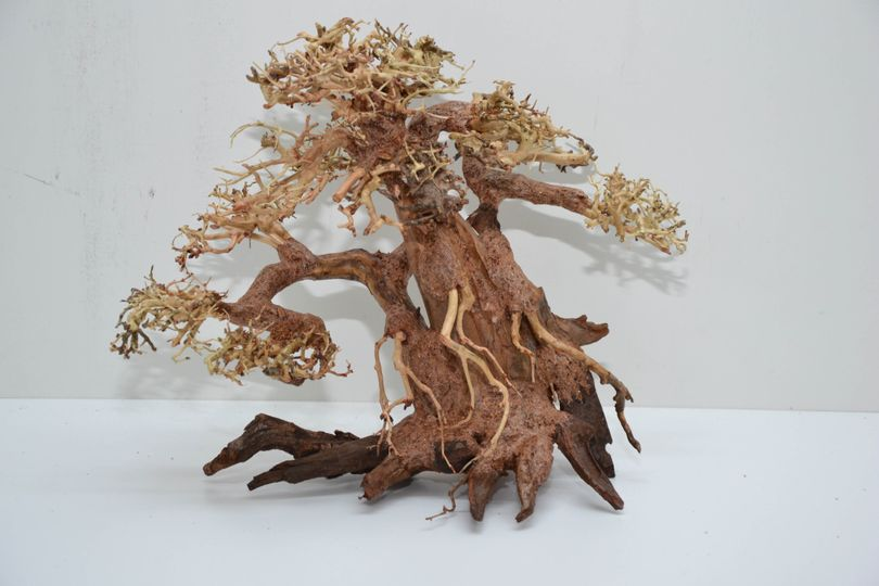 Bonsai Baum L original Foto Nr.11011 Wurzel Holz Aquarium Deko Aquascaping