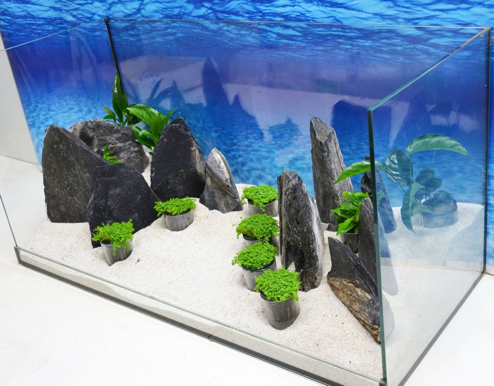 aquarium dekoration komplettset steine deko felsen pflanzen tropica aquaristik fertige. Black Bedroom Furniture Sets. Home Design Ideas