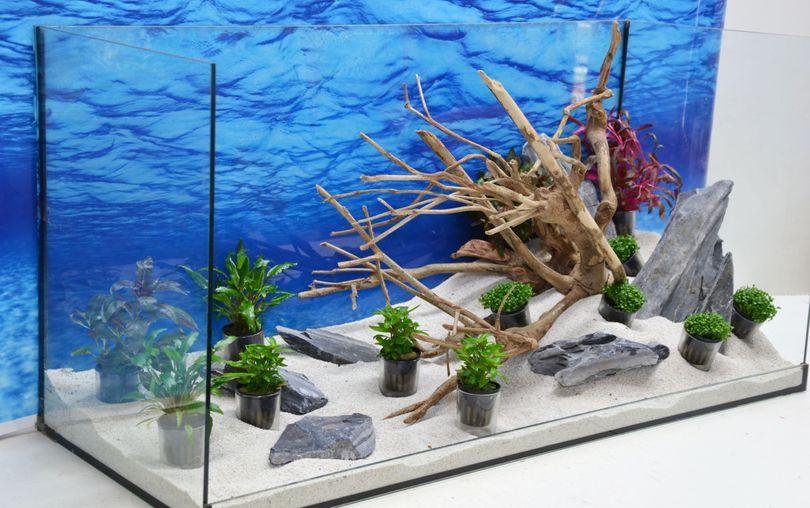 Aquarium Deko Komplettset- Talawawurzel Steine Wasserpflanzen Aquascaping Nr.212 Bild 5