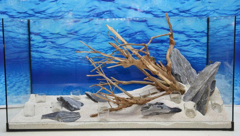 Aquarium Deko Komplettset- Talawawurzel Steine Wasserpflanzen Aquascaping Nr.212 Bild 10
