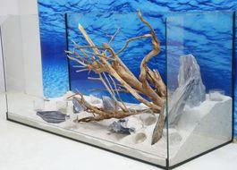 Aquarium Deko Komplettset- Talawawurzel Steine Wasserpflanzen Aquascaping Nr.212 Bild 7