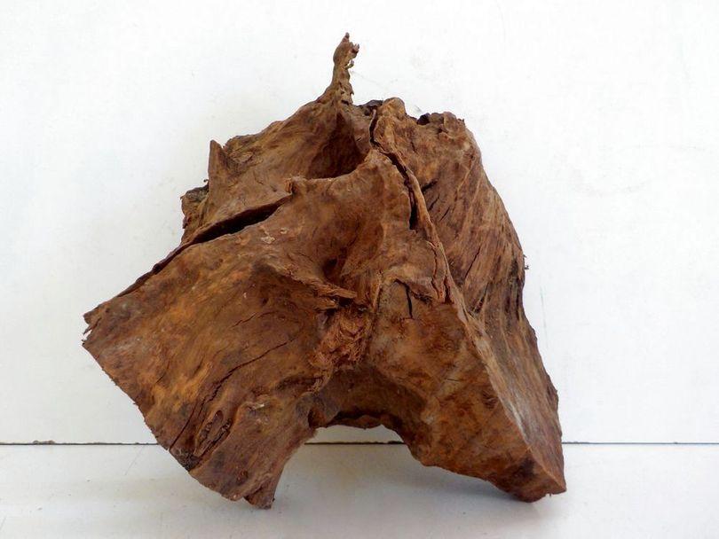 XL Mangrovenwurzel Maße 38x29x40 Nr.8044