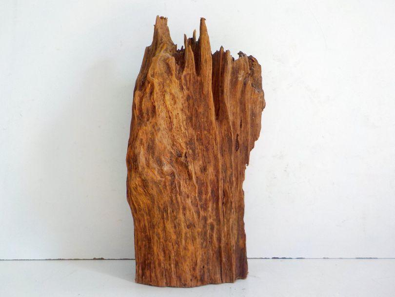 XL Mangrovenwurzel Maße 19x21x46 Nr.8054