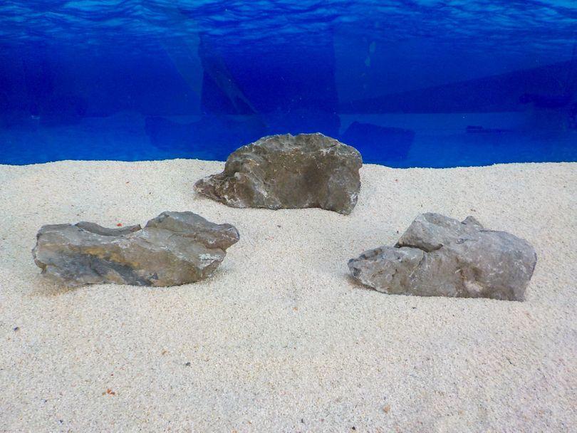 "Aquarium graue Dekosteine Seiryu Art.67 ""original Foto"" Größe M 12-18cm Nr.8247"